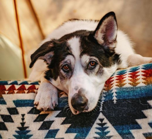 What To Bring Camping With Dogs